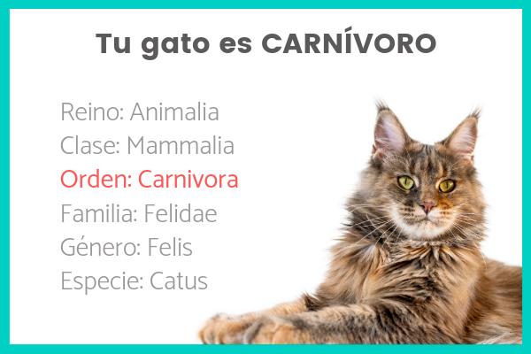 tu gato es carnívoro