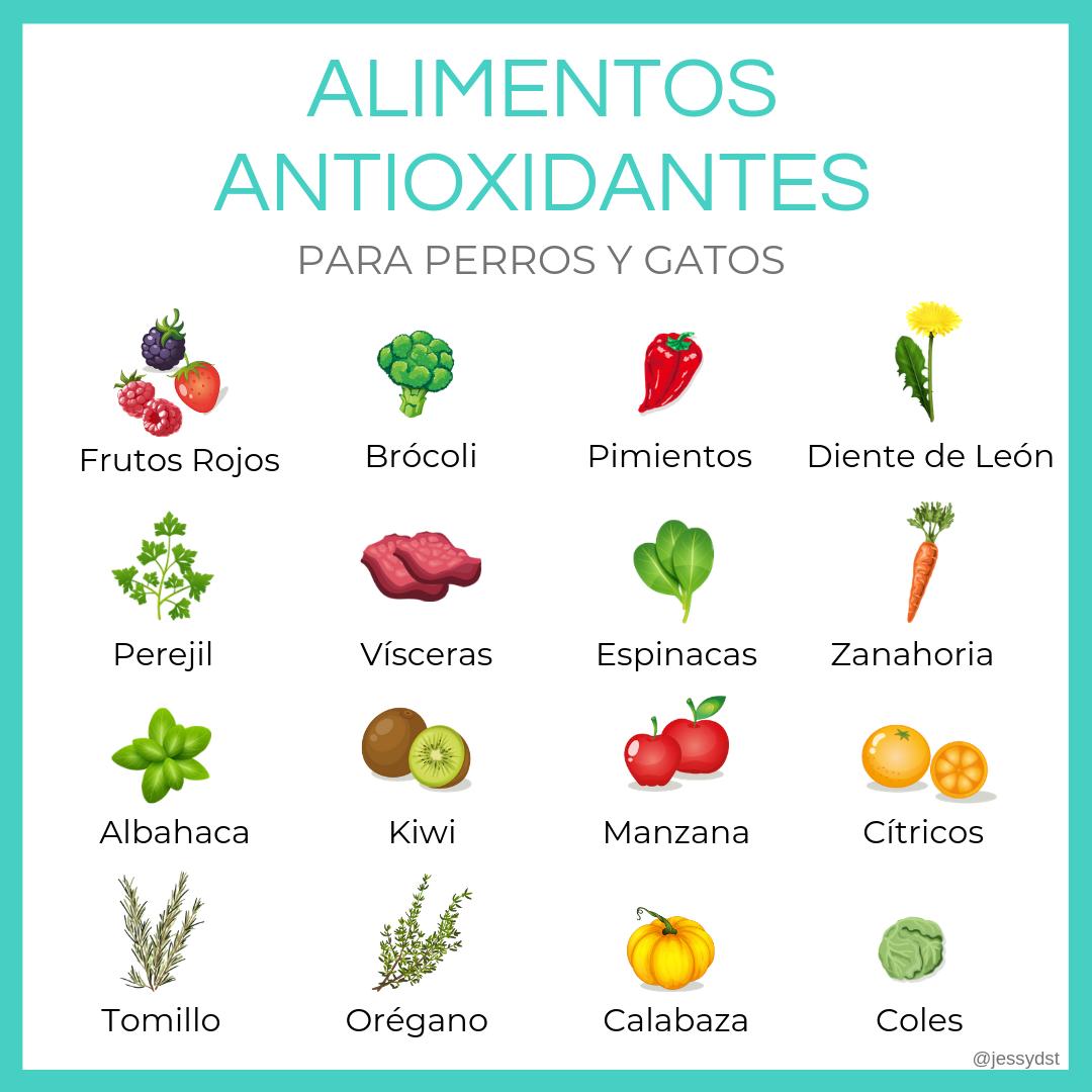 alimentos antioxidantes para perros