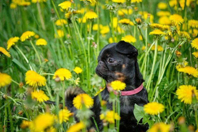 hierbas nutritivas para perros y gatos