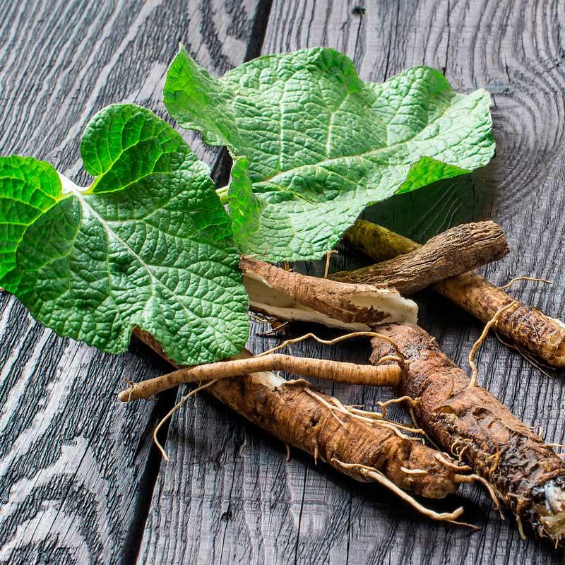 Raíz de Bardana: hierbas nutritivas para perros y gatos