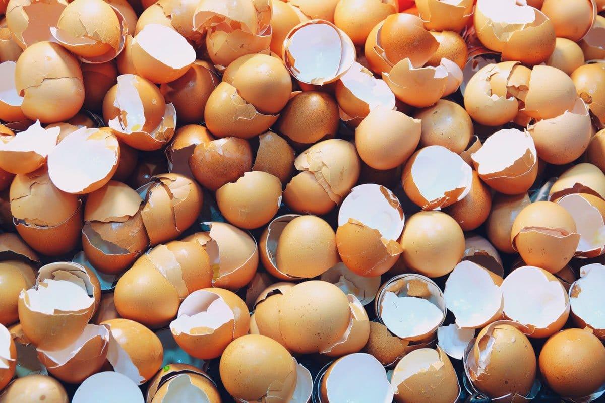 calcio de cascara de huevo para perros y gatos