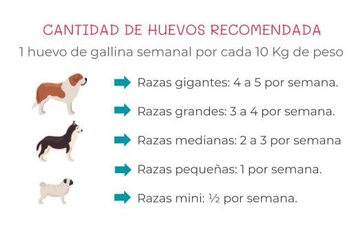 cantidad de huevos por semana para perros y gatos