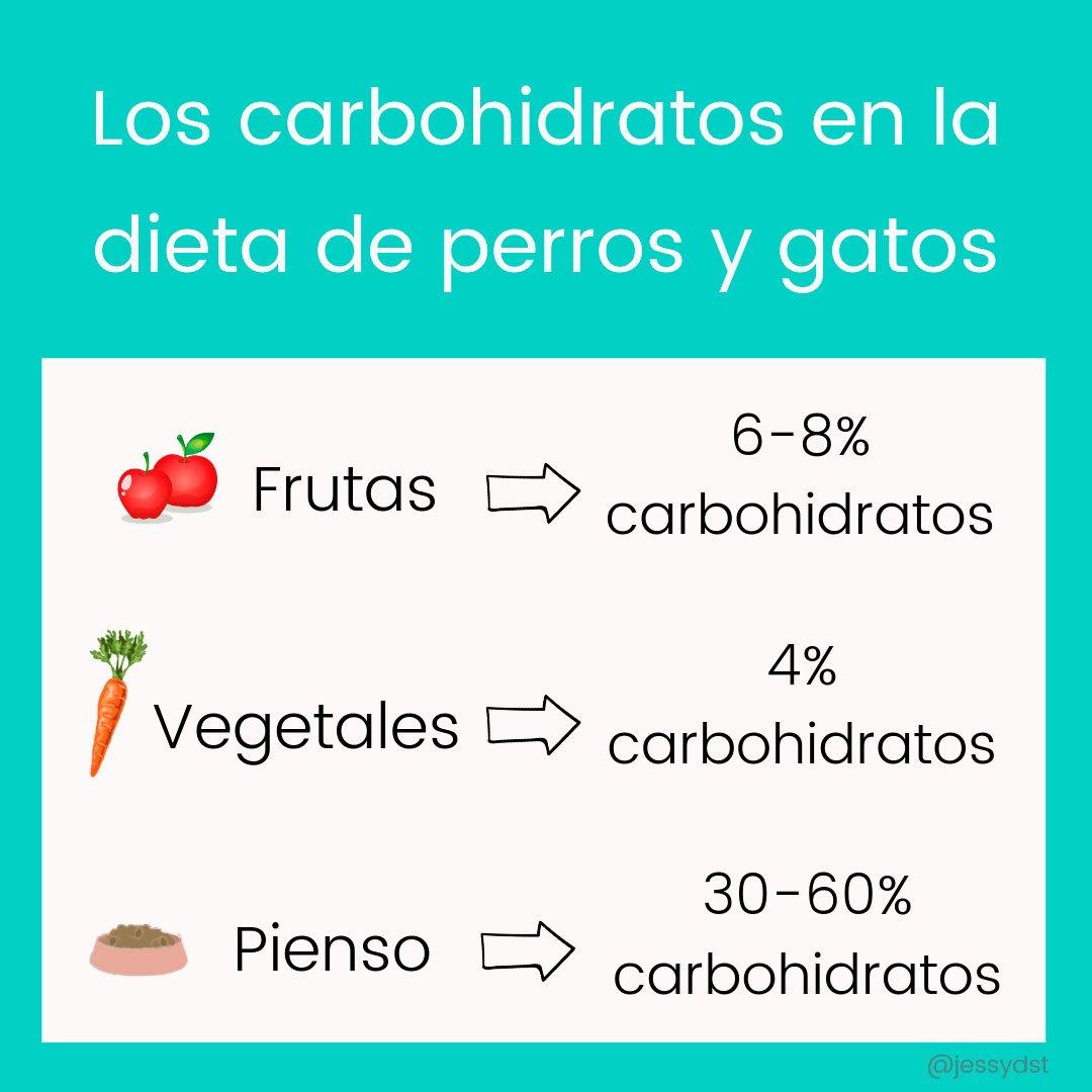 carbohidratos en la dieta de los perros