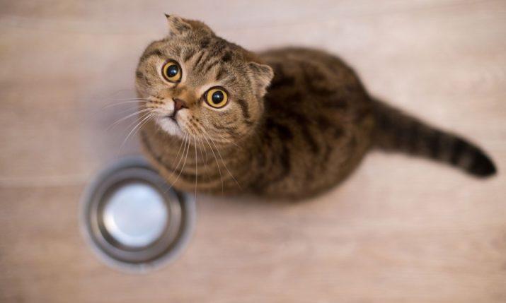 como calcular la racion de comida de un gato adulto en la dieta barf